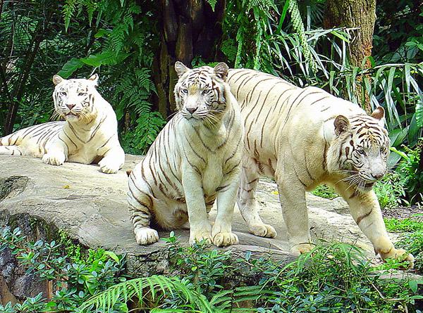 День 2. Сингапур. Зоопарк. Ночной Сингапур