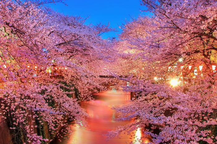 Ханами Япония